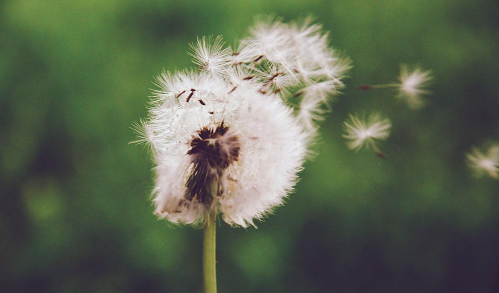 polen-primavera