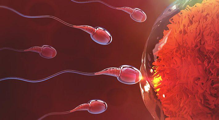 Últimos avances en Reproducción Asistida