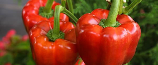 El pimiento rojo, una de las mejores fuentes de Vitamina C